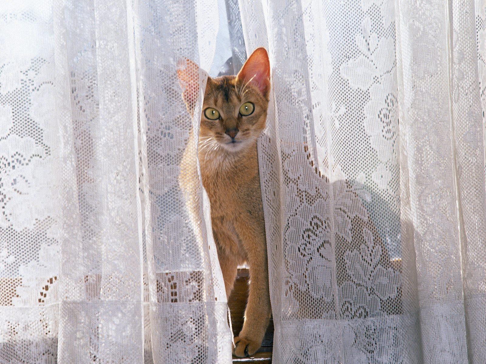 可爱小猫 >> 新疆砾石探险户外俱乐部 >> 是你理想的