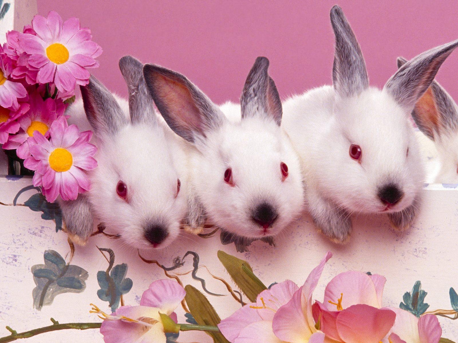 游戏:三只小兔子。 1、现场布置游戏场景,把四个衣服图标分别放在教室的四个地方。 2、教师简述故事情节,配班教师扮演大灰狼,幼儿扮演小兔子。 配班教师讲到春天时,小兔子要躲到绿色衣服图标后面,大灰狼就找不到了,如果没躲起来就要抓住,以次类推直到故事结束,游戏也就结束。 附故事: 三只小兔 森林里有一座小房子,里面住着三只小兔,看见小兔大灰狼馋得流口水,他说:我要把小兔全吃掉! 春天,山坡绿了,树叶绿了,三只小兔穿上了绿衣服。大灰狼找不到小兔。 夏天,山坡上开满了花,树上开满了花,三只小兔穿上了